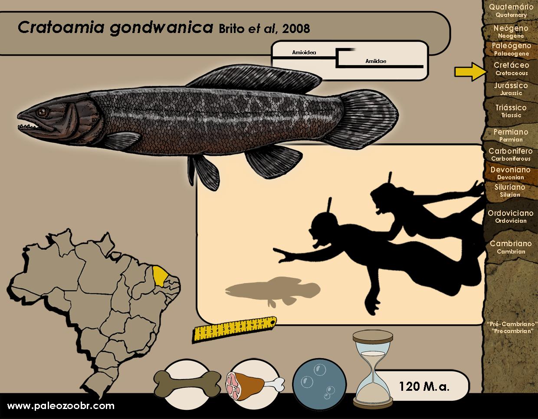 Cratoamia gondwanica