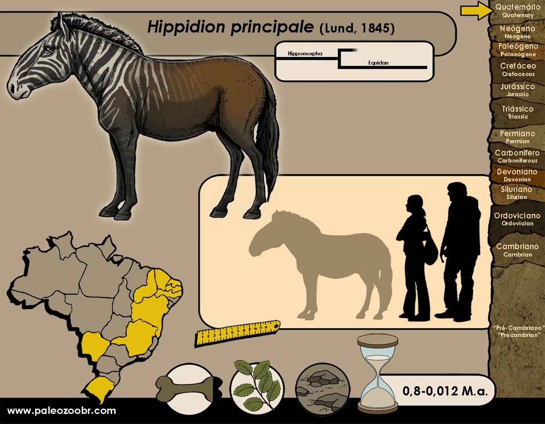 Hippidion principale