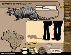 Eobrasilia coutoi