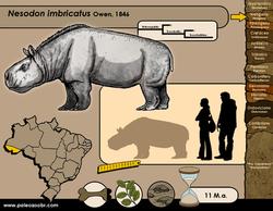 Nesodon imbricatus