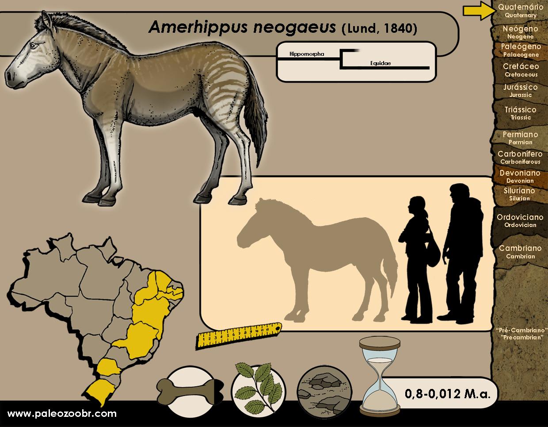 Amerhippus neogaeus