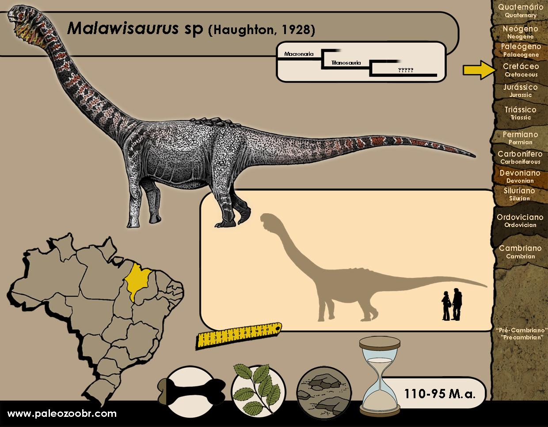 Malawisaurus sp