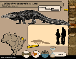 Caririsuchus camposi