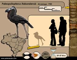 Paleopsilopterus itaboraiensis