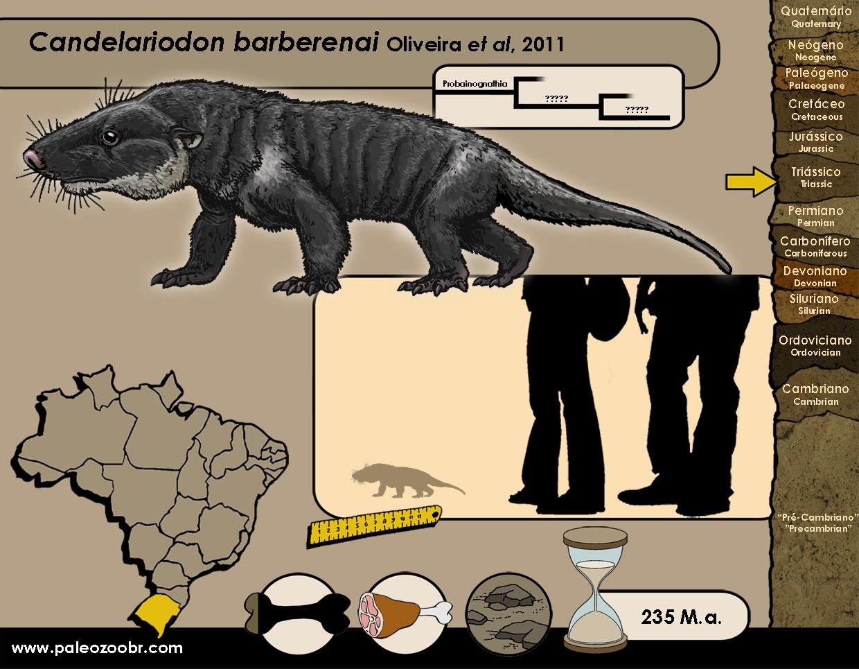 Candelariodon barberenai