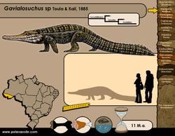 Gavialosuchus sp