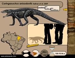 Coringasuchus anisodontis