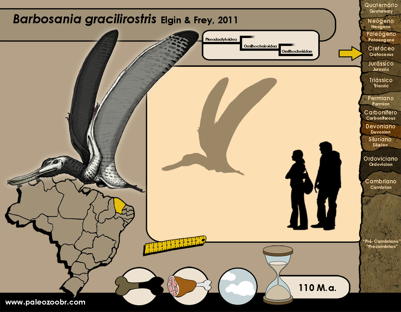Barbosania gracilirostris