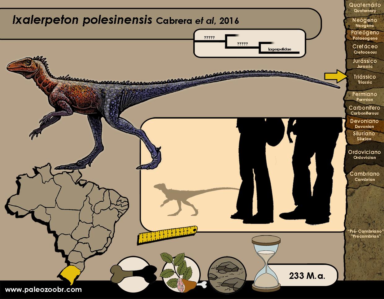 Ixalerpeton polesinensis
