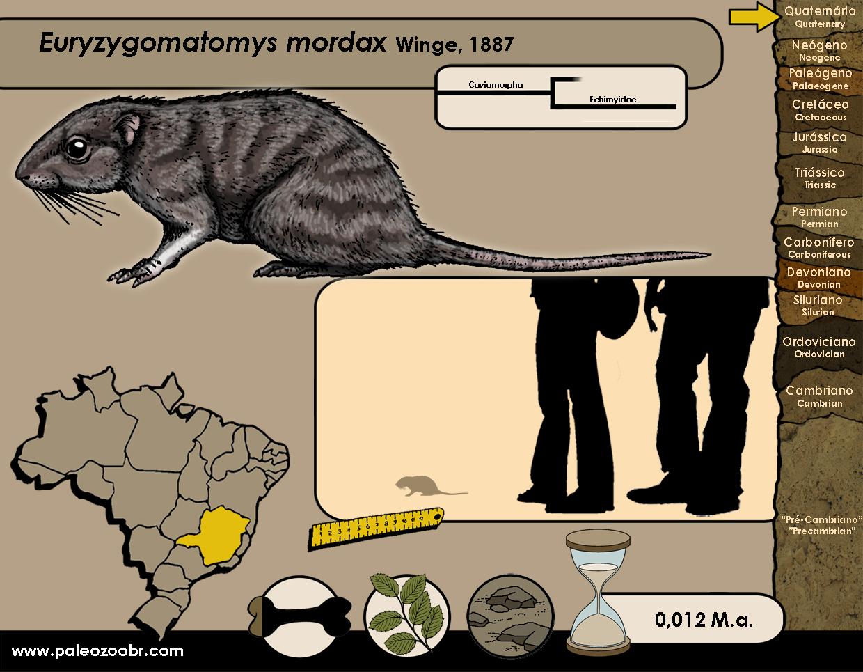 Euryzygomatomys mordax