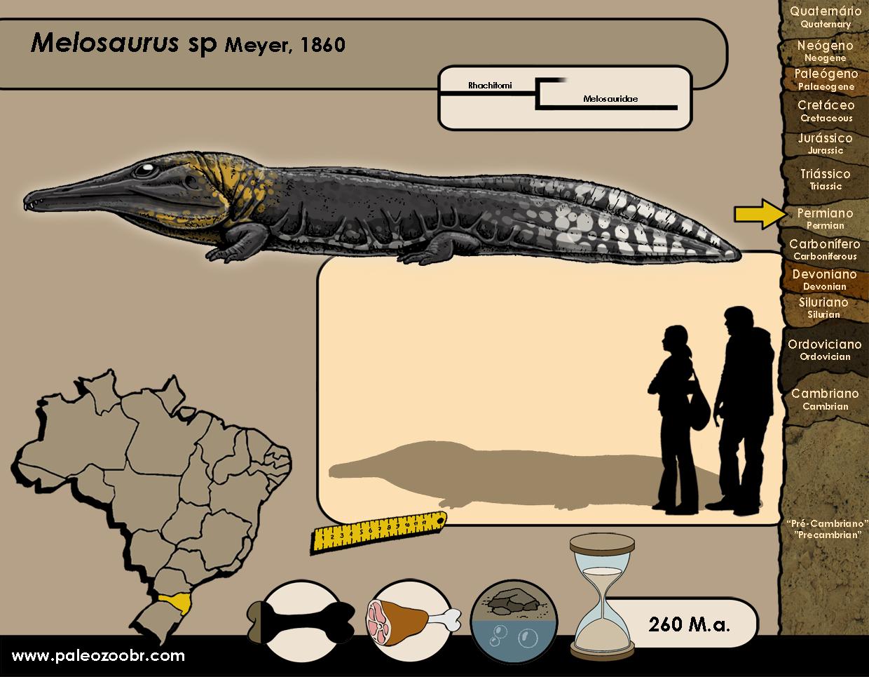 Melosaurus sp