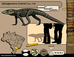 Sphagesaurus huenei