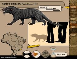 Patene simpsoni