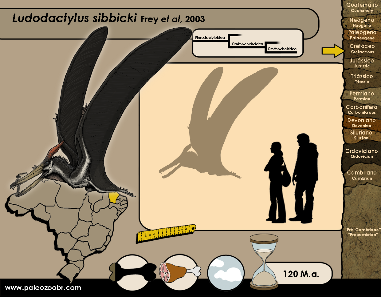 Ludodactylus sibbicki