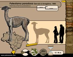 Paleolama paradoxa
