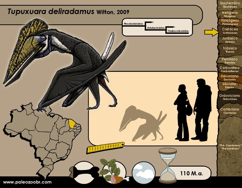 Tupuxuara deliradamus