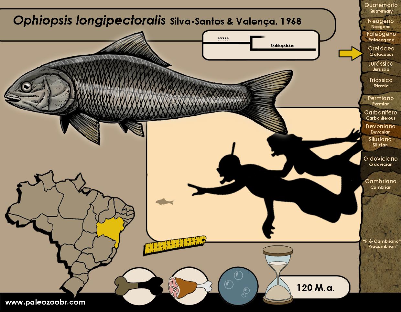 Ophiopsis longipectoralis