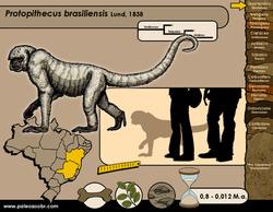 Protopithecus brasiliensis