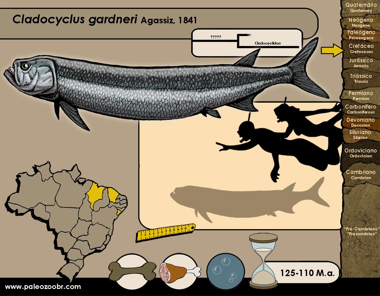 Cladocyclus gardneri