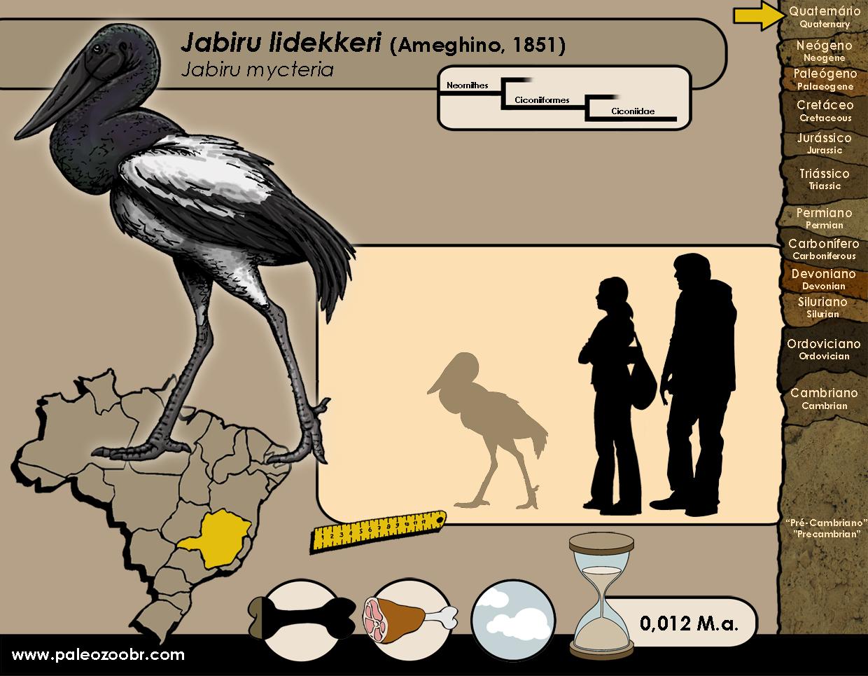 Jabiru lidekkeri