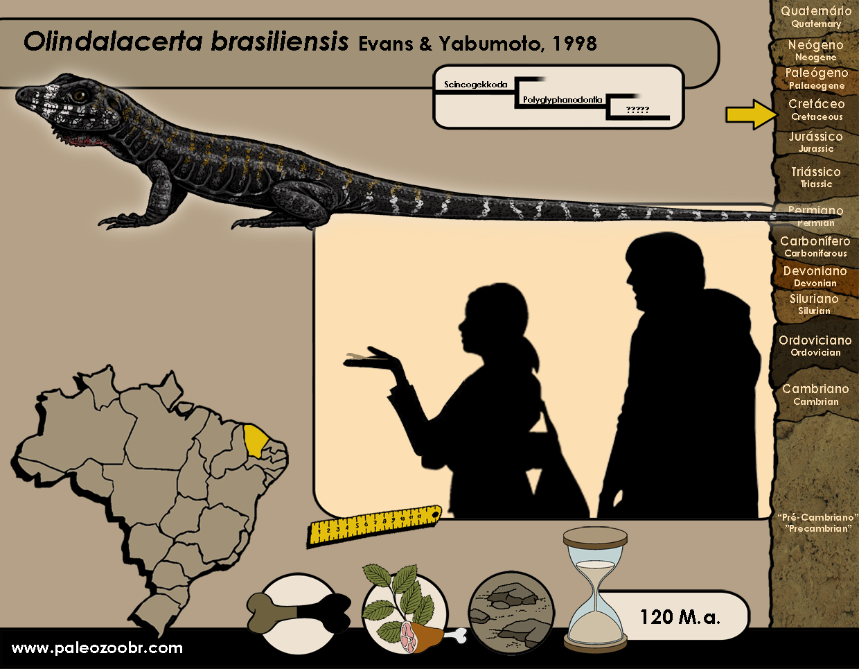 Olindalacerta brasiliensis
