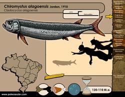 Chiromystus alagoensis