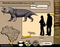 Rastodon procurvidens