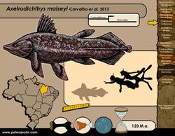 Axelrodichthys maiseyi