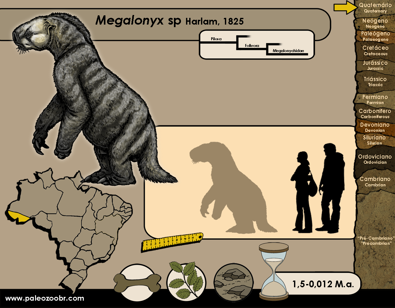 Megalonyx sp