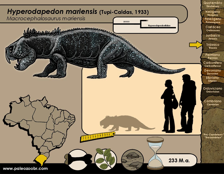 Hyperodapedon mariensis