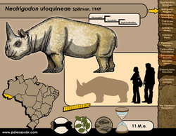 Neotrigodon utoquineae