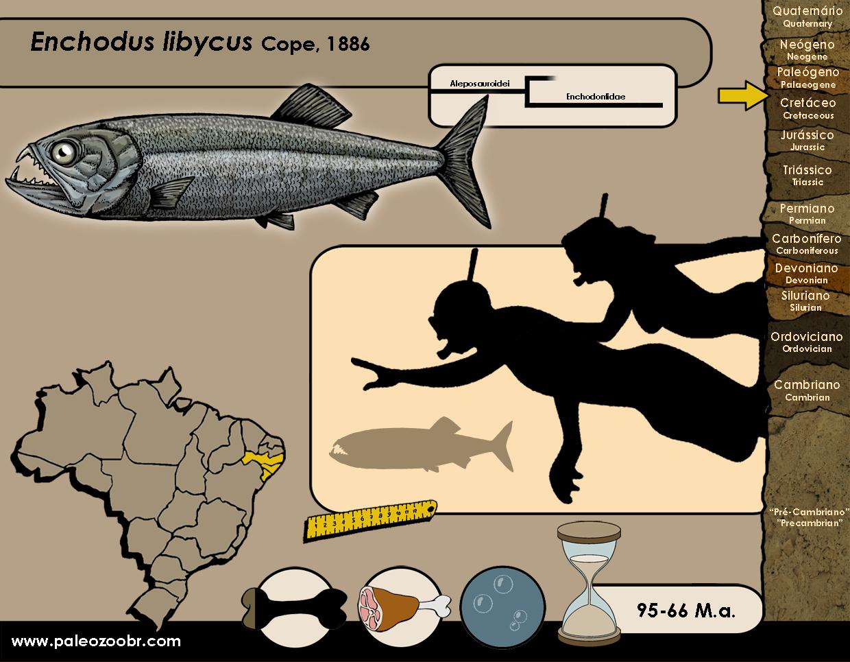 Enchodus libycus