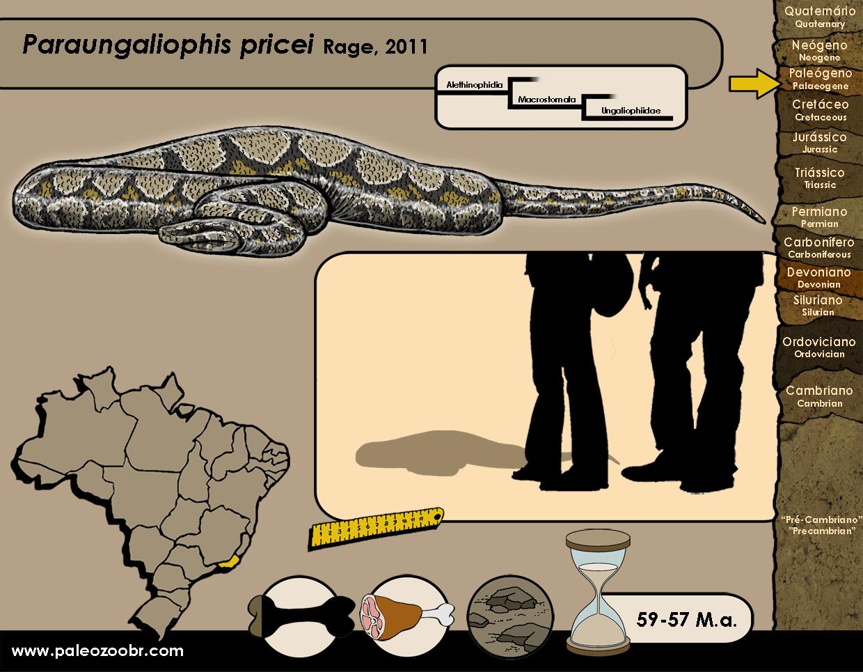 Paraungaliophis pricei