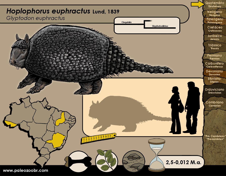 Hoplophorus euphractus