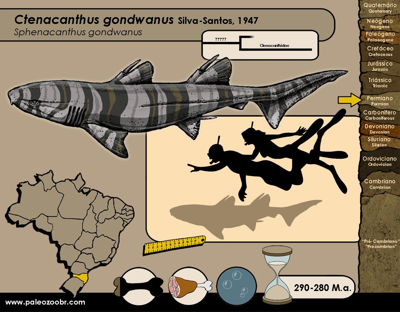 Ctenacanthus gondwanus