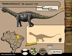 Rebbachisaurus sp