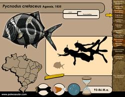 Pycnodus cretaceus