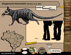 Diogenesia brevirostris