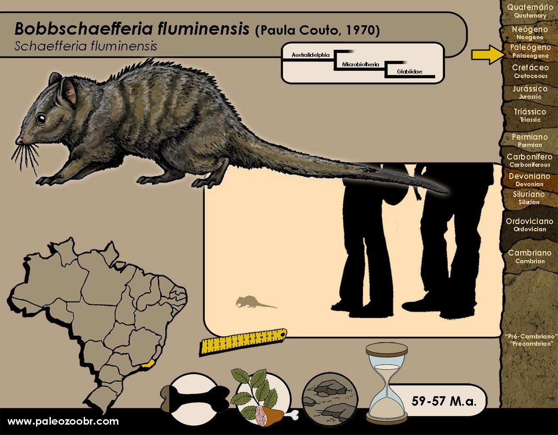 Bobbschaefferia fluminensis