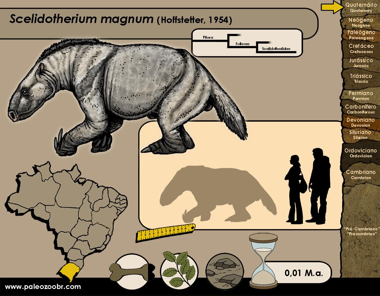 Scelidotherium magnum
