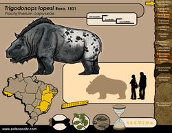 Trigodonops lopesi