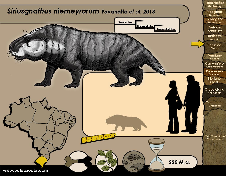 Siriusgnathus niemeyrorum