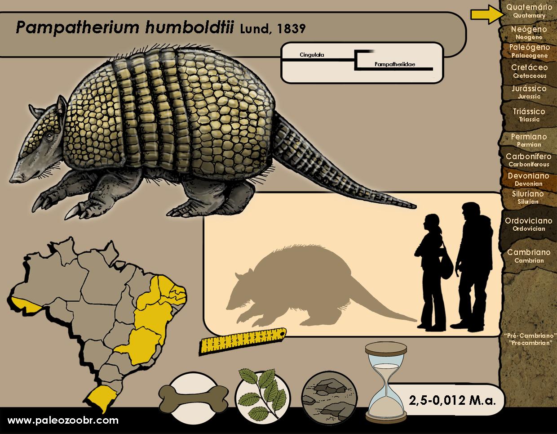 Pampatherium humboldtii