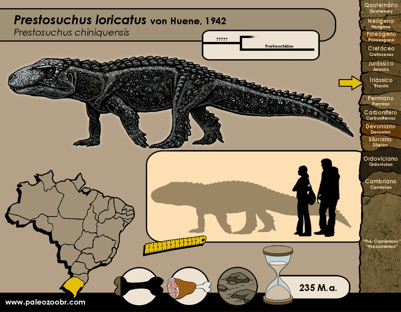 Prestosuchus loricatus