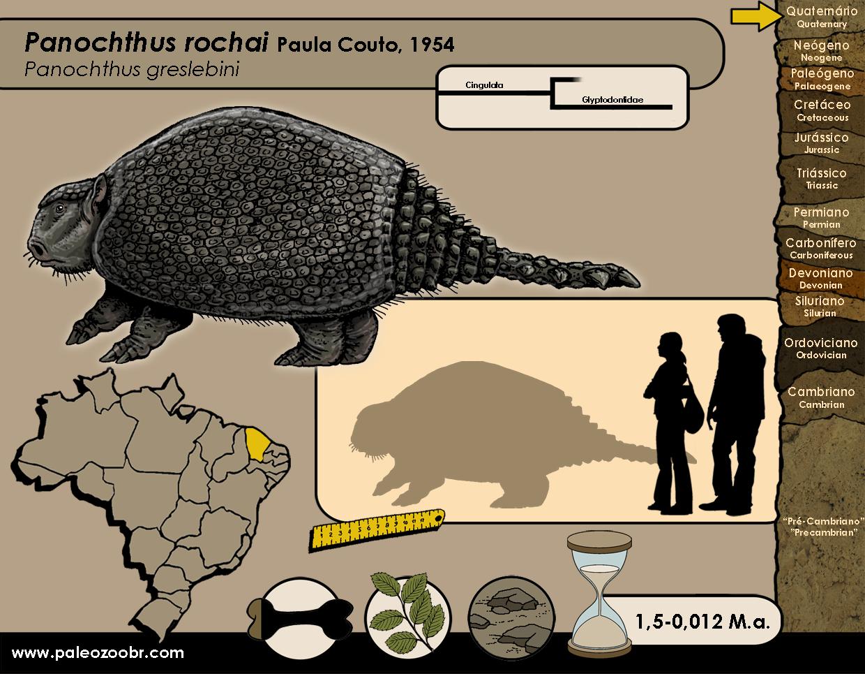 Panochthus rochai