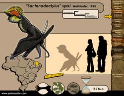 Santanadactylus spixi