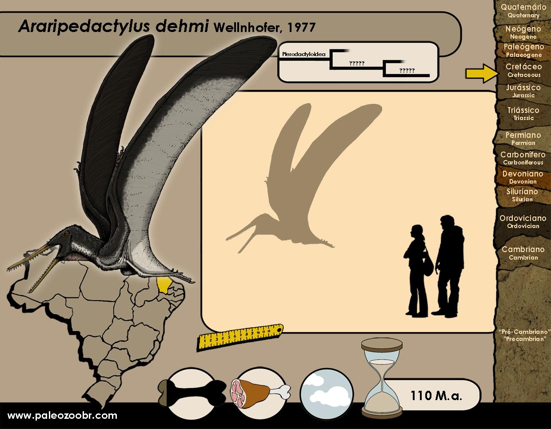 Araripedactylus dehmi