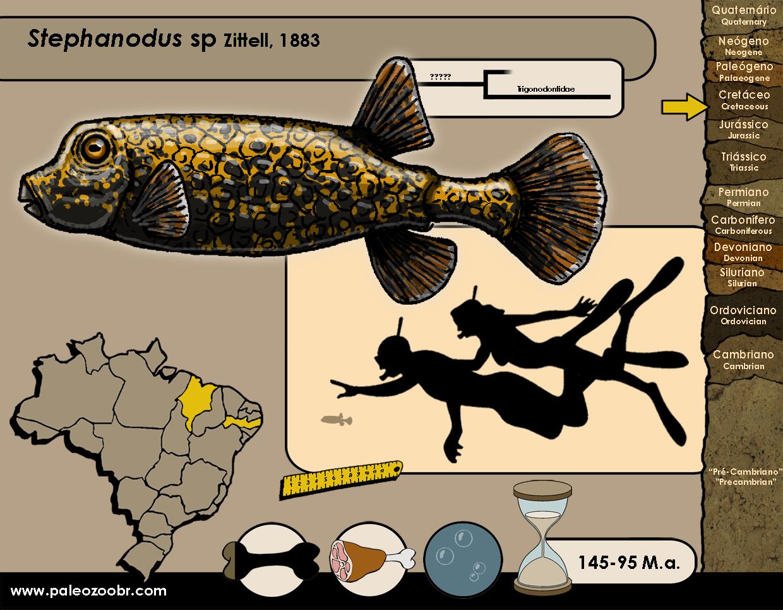 Stephanodus sp