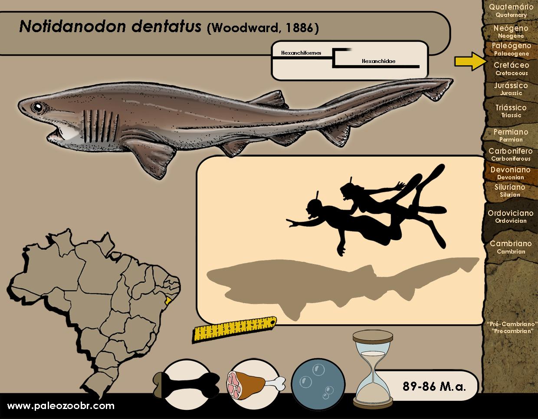 Notidanodon dentatus