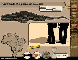 Paulacoutophis perplexus
